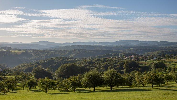 Hochstamm Landschaft St. Pantaleon