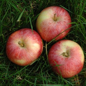 Three apples on grass