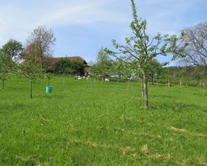 Nussbau Steiner Bioobstgarten